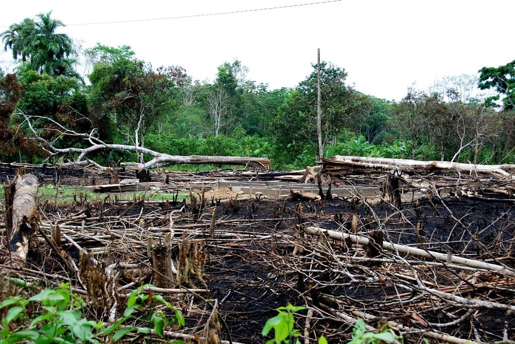 Immer mehr Migranten verlassen Zentralamerika aufgrund der Folgen des Klimawandels.
