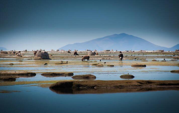 Der Uru-Uru-See Bilder wie diese sind am Uru-Uru-See aufgrund von riesigen Plastikmengen mittlerweile eine Seltenheit |  Bild: © Viaje a Bolivia [CC BY 2.0]  - Flickr
