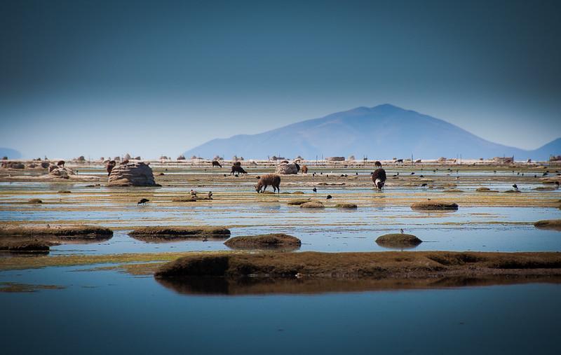 Der Uru-Uru-See