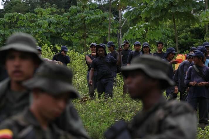 "Kolumbianische Polizei beseitigt eine Koka-Plantage Die kolumbianische Polizei bei der Beseitung einer Koka-Plantage    Bild: ""Colombia Coca Erradication"" © Policía Nacional de los colombianos [CC BY-SA 2.0]  - https://www.flickr.com/"