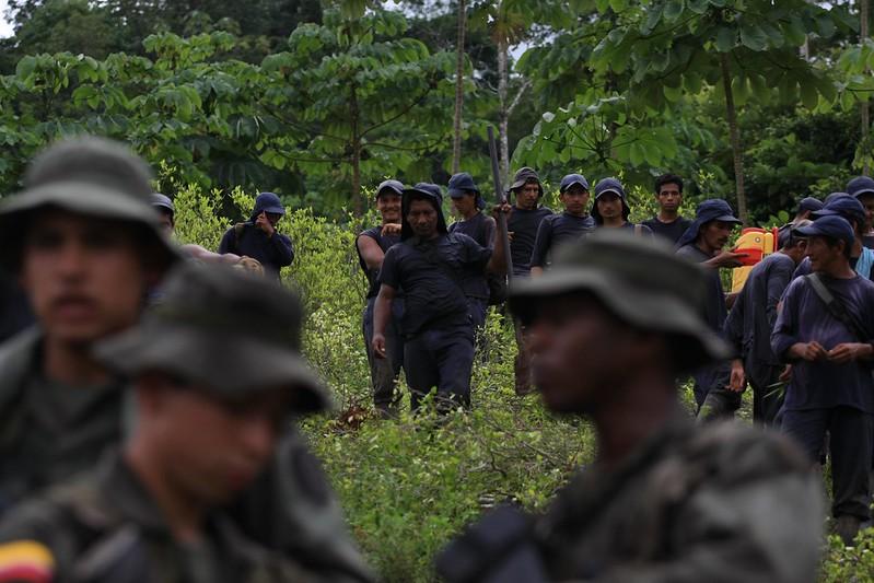Kolumbianische Polizei beseitigt eine Koka-Plantage